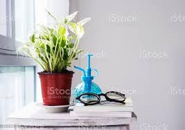haus und garten dekoration der efeutute aureum im schlafzimmer stockfoto und mehr bilder abschied