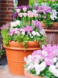 how to grow bulbs in containers