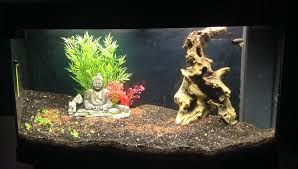 liste des plantes pour un aquarium de 180l et 140w de lumière