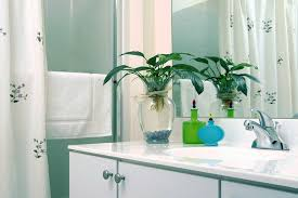Good Plants For Bathroom by Best Houseplants For Bathrooms Home Design