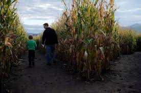 Denver Area Pumpkin Patches by Colorado Pumpkin Patches And Corn Mazes 2016