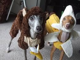 Old Westbury Gardens Dog Halloween by Halloween Pet Costumes 2013 104 1 Jack Fm