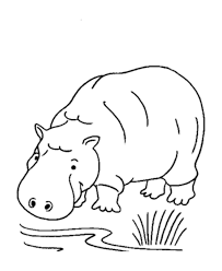 Jungle Animals Coloring Pages For Kids Hippo