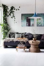 immergrüne kletterpflanzen für die raumgestaltung verwenden