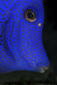 Decorator Crab Tank Mates by 516 Best Marine Corals Clams Reefs Kelp Fish Salt