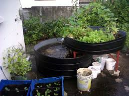 COMPLETE OVERVIEW Aquaponics System And Greenhouse Build YouTube