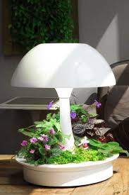 Grow Lamps For House Plants by 25 Best Ambienta Images On Pinterest Houseplants Indoor Plants