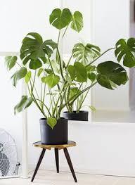 plante d駱olluante bureau plantes carnivores leur beauté fatale en 42 photos