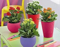 pflegeleichte zimmerpflanzen im schlafzimmer sorgen für