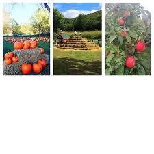 Lodi Pumpkin Patch Wisconsin by Ferguson U0027s Orchards Galesville Home Facebook