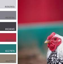 Chicken Bright Colour Palette