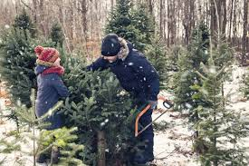 The Best Spots To Chop Down Your Own Christmas Tree In Canada