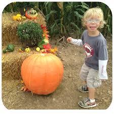 Pumpkin Patch Nw Arkansas by Corn Maze