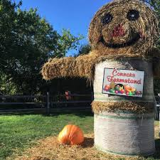 Conners Pumpkin Patch Jacksonville Fl by 6 Best Corn Mazes In Boston In 2017