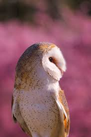 17 Best Owls Images On Pinterest | Owls, Barn Owls And Children 382 Best Barn Owls Images On Pinterest Barn Owl Photos And Beautiful My Sisters Favorite It Used To Be Mine Pin By Hans De Graaf Uilen Bird Animal Totem Native American Zodiac Signs Birth Symbolism Meaning Dreams Spirit 1861 Snowy Saw Whets 741 Owls Birds 149 Animals 2 Snowy Owl Necklace Ceramic Pendant The Goddess Touch Animism Youtube Pole Trollgirl Deviantart