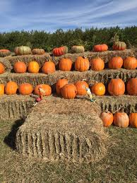 Pumpkin Patch Greenbrier Arkansas by Drewry Farm U0026 Orchards Home Facebook