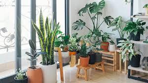 so verbessern zimmerpflanzen das raumklima