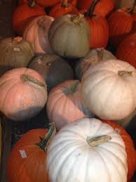 Daves Pumpkin Patch Tampa by Gallery U2013 Dave U0027s Christmas Tree Lot