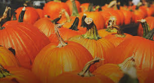 Sand Springs Pumpkin Patch by Top 10 Pumpkin Patches Around Austin U2013 Do512 Family