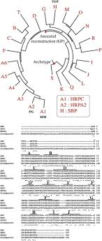 Stability properties of an ancient plant peroxidase ScienceDirect