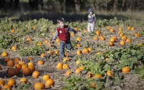 Pumpkin Patch Northwest Arkansas 2015 by Take Your Pick From Wichita Area U0027s Pumpkin Patches The Wichita Eagle