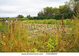 Lawrence Pumpkin Patch by Pick Your Own Farm Stock Images Royalty Free Images U0026 Vectors