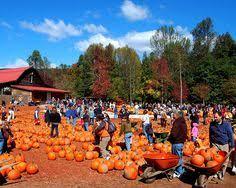 Gust Brothers Pumpkin Farm by South Barrington Illinois Real Estate And South Barrington