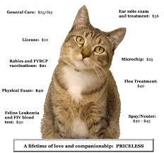 adopt a cat what you get when you adopt sacramento spca