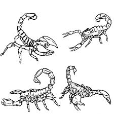 Free Printable Scorpion Coloring Pages For Kids Throughout
