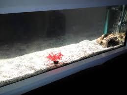 aquarium dans le mur aquarium encastrer dans le mur
