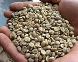 Coffee Beans Yemen ProductsYemen Supplier
