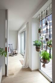 hängende zimmerpflanzen am fenster im bild kaufen