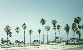 California Tumblr Photography Palm Trees Wallpaper 4 Dusk With PIC WSW2076664 11 15