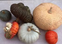 Varieties Of Pumpkins Uk by Winter Squashes Sea Spring Seeds