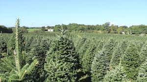 Wyckoff Christmas Tree Farm by Wholesale Christmas Trees By Valfei Youtube
