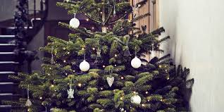 Type Of Christmas Trees Decorated In India by How To Care For Your Potted Christmas Tree