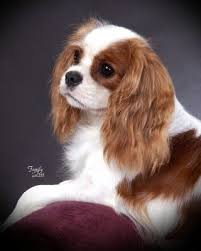 Best Guard Dogs That Dont Shed by Best 25 Medium Dog Breeds Ideas On Pinterest Medium Dogs