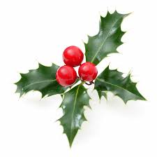 Types Of Christmas Tree Leaves by Is Holly Poisonous To Dogs And Cats Holly Plant Poisoning