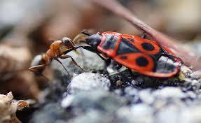 können rote ameisen wirklich pinkeln wald vielfalt entdecken