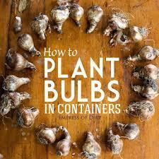 best 25 how to plant bulbs ideas on planting bulbs