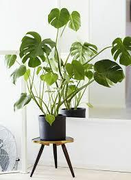 zimmerpflanzen pflegeleicht und auch für anfänger geeignet