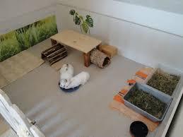 kaninchen info wohnungsgehege