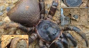 electrom駭ager cuisine creepy crawler ancient seal found in china proves to be