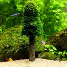 Driftwood Christmas Trees Nz by Online Buy Wholesale Moss Tree Aquarium From China Moss Tree