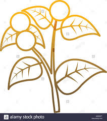 Degraded Line Coffee Tree Plant With Leaves Branch Vector Illustration