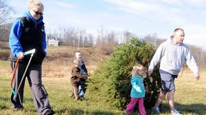 Wyckoff Christmas Tree Farm by Where To Cut Your Own Christmas Tree On Long Island Newsday