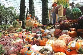 Varieties Of Pumpkins by Catch This Autumn Display Featuring 2000 Pumpkins In 22 Varieties