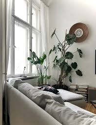 monstera pflanzen wohnzimmer sofa altbau b