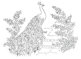 Peacock Coloring Page Free Feathers Pages For Preschoolers
