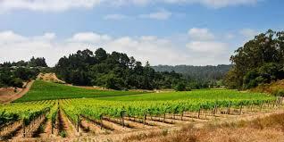 Best Christmas Tree Farms Santa Cruz by Dining In Santa Cruz Visit California